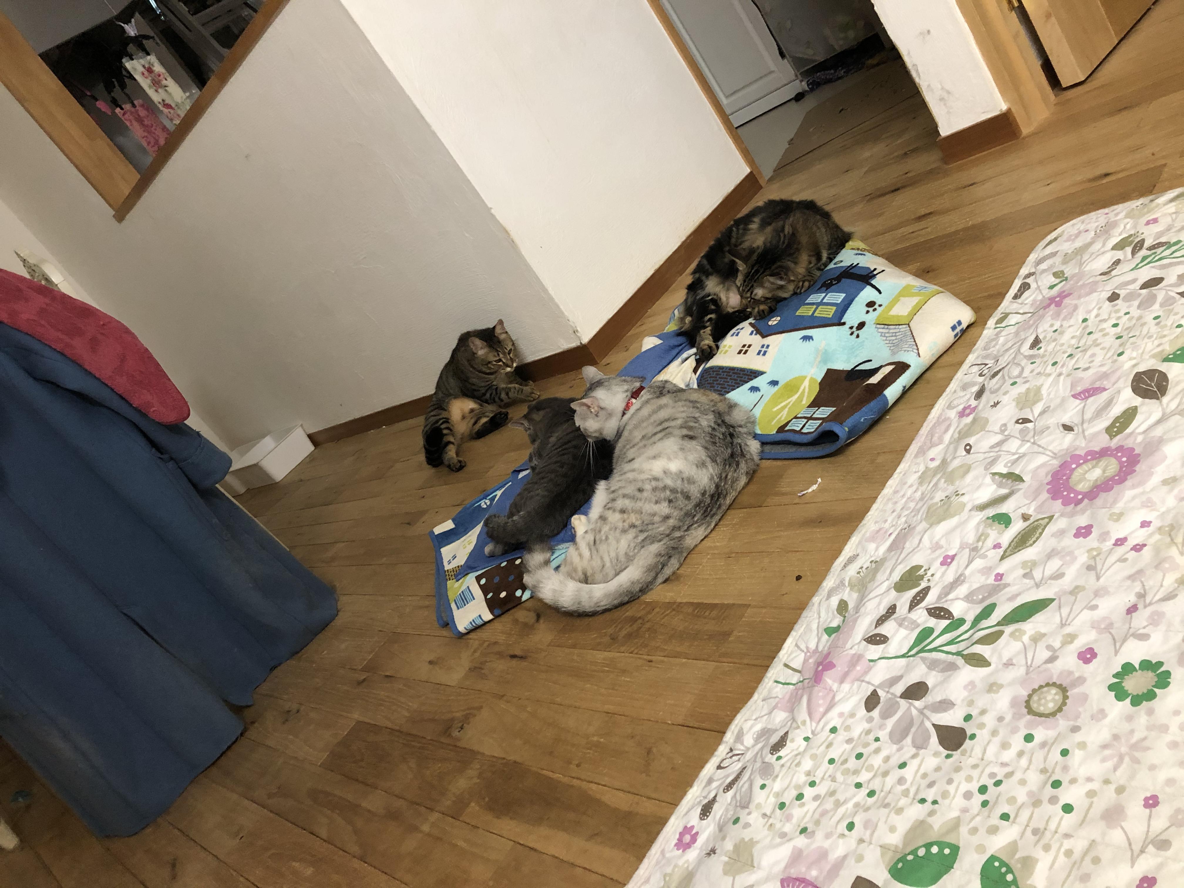 20191022タヌオ消えて現る!!