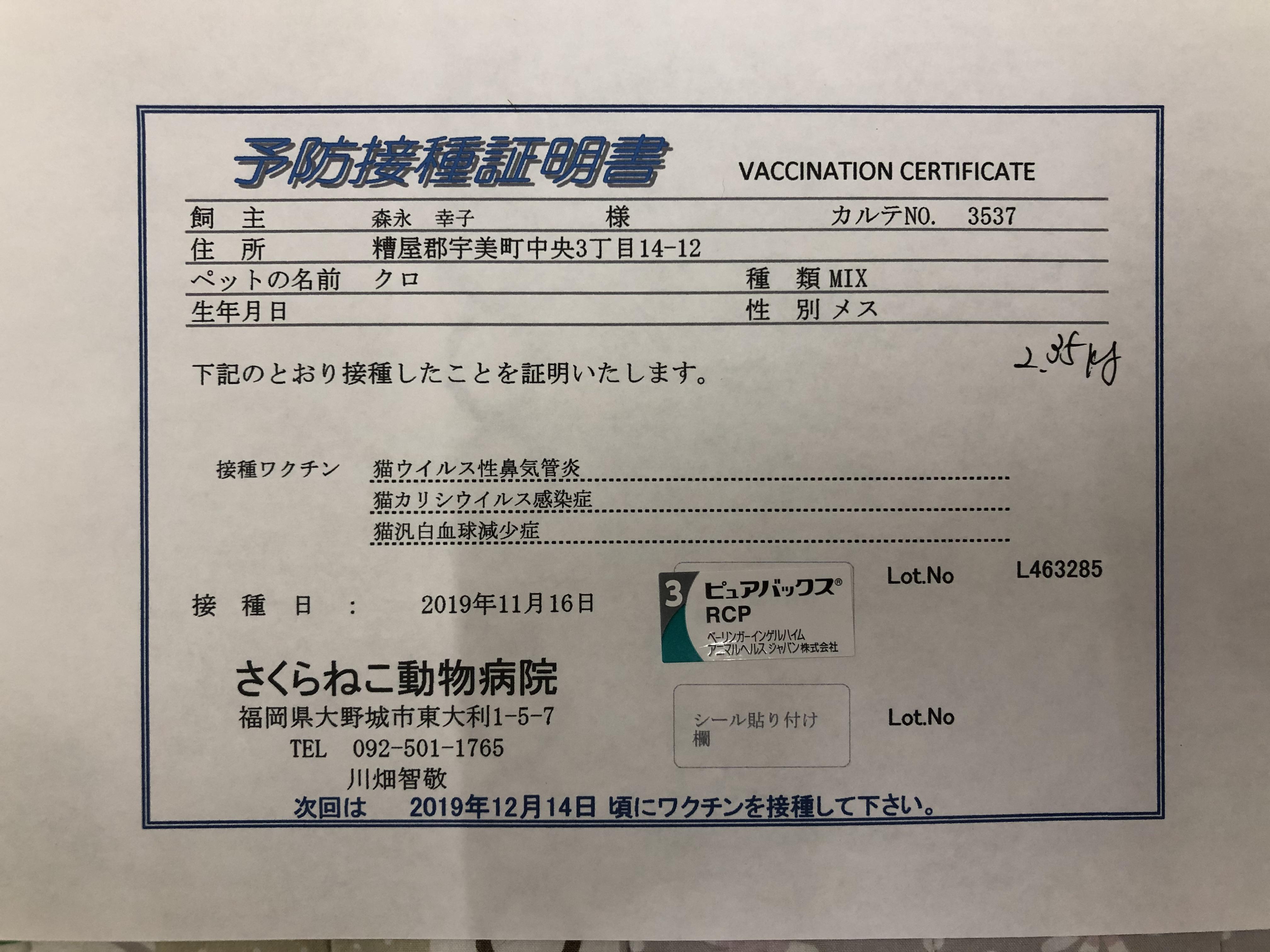 201911165にゃんワクチン接種へ