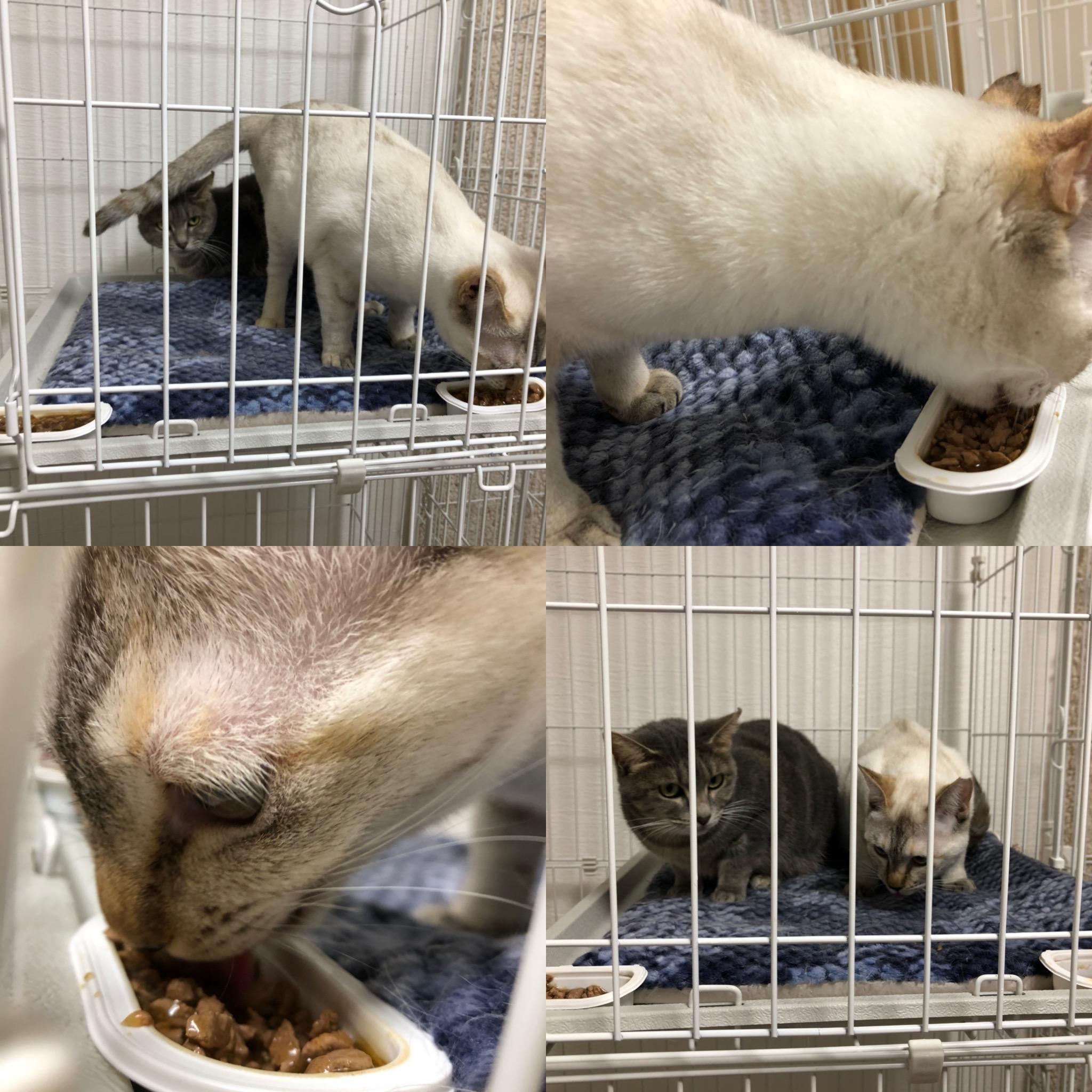 20191225保護猫クリスマス♡シーバでおいしい♡