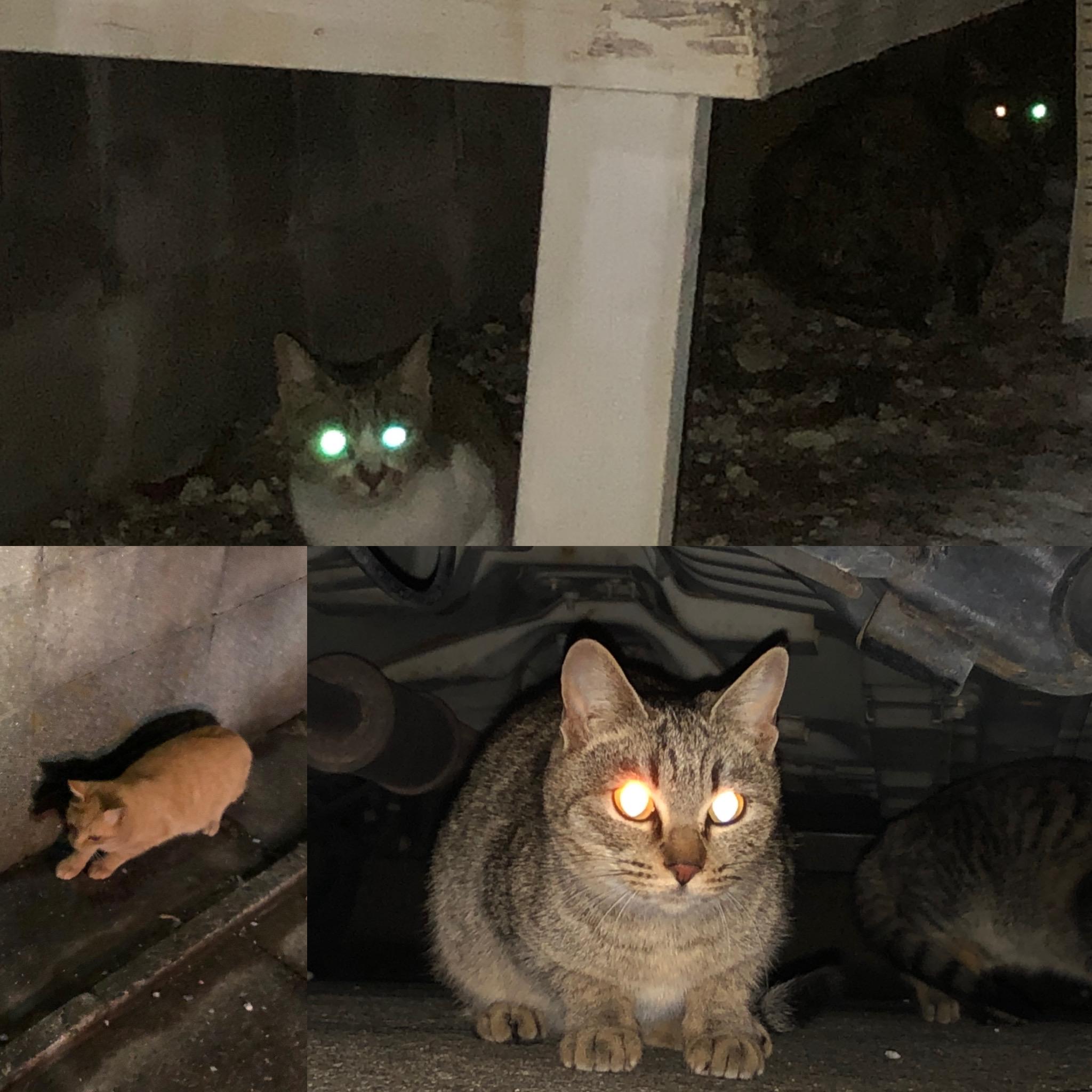 20210108須恵港近くの長屋集落付近の猫達